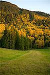 Fall Scene near Hope, British Columbia, Canada