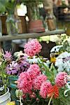 Couper les fleurs pour les vendre au marché de l'agriculteur biologique