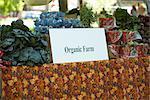 Organic Vegetables For Sale at Farmer's Market
