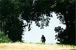 Cycliste à travers la voûte d'arbres