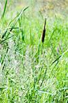 Champ de hautes herbes et fleurs sauvages