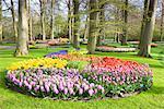 Hyacinths and Tulips in Keukenhof Gardens, Lisse, Netherlands