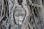 Buddha Statue in Fig Tree, Ayutthaya, Thailand