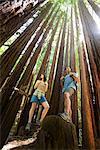 Hikers Standing on Tree Stump in Redwood Forest, Santa Cruz, California, USA