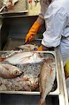 Worker in Fish Market