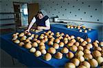 Hutterite Woman Baking Rolls, Silver Sage Colony, Alberta, Canada