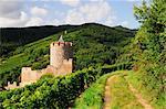 Chateau de Kaysersberg, Kaysersberg, Haut-Rhin, Alsace, France