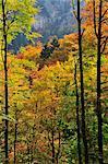 Autumn Forest in Mountains, Bernese Alps, Switzerland