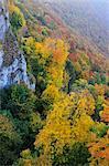 Forêt, à flanc de montagne, Schwaebische Alb, Bade-Wurtemberg, Allemagne
