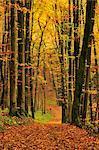 Path through Forest, Franconian Switzerland, Bavaria, Germany