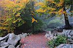 Walkway through Stone Run in Forest, Reichenbach, Odenwald, Hessen, Germany
