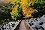 Boardwalk through Stone Run in Forest, Reichenbach, Odenwald, Hesse, Germany