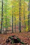 Forest in Fog, Spessart, Bavaria, Germany