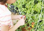 Élèves du primaire observation tomate