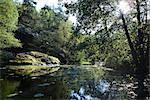 Scène paisible étang