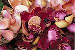 Shivalinga flowers (Couroupita guianensis)