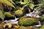 Ruisseau, Mont Donna Buang, Parc National des Yarra Ranges, Victoria, Australie