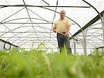 Farmer Standing In Polytunnel