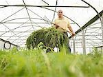 Farmer Weeding In Polytunnel