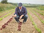 Farmer Tending Crops In Field
