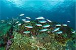 Fish at richelieu rock
