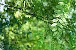 Lumière du soleil qui brille à travers les feuillages, focus sur la branche en avant-plan