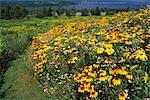 Jardin sauvage, Shampers Bluff, Nouveau-Brunswick, Canada