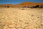 Cracked Earth, Namib-Naukluft National Park, Namibia
