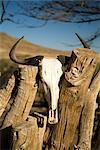 Animal Skull on Fence, Namib-Naukluft National Park, Namibia