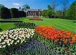 Tulpen und der Orangerie, Kensington Palace, Kensington Gardens, London, England, UK