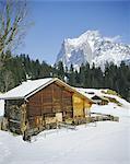 Le Mont Wetterhorn au-dessus de Grindelwald, Oberland bernois, Grisons, Suisse, Europe
