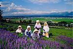 Lavender fields, Furano, Hokkaido, Japan