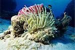 Mer dont, mer des Caraïbes, l'Amérique centrale