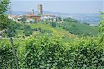 Vines in vineyards around Barbaresco, the Langhe, Piemonte (Piedmont), Italy, Europe