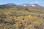Ascension du volcan Gorely, plantes de la toundra sur les pentes, jantes cratère du sommet dans le ciel, Kamchatka, Sibérie orientale