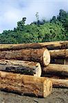 Logging in the rain forest, hardwood awaiting river transport, Limbang River, Sarawak, island of Borneo, Malaysia