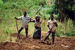 Workers hoeing field, Kabale, Uganda, Africa