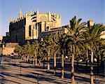 La cathédrale chrétienne, avec des palmiers à l'avant-plan, Palma, Majorque (Majorque), îles Baléares, Espagne, Méditerranée, Europe