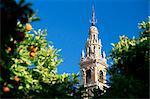Haut de la Giralda, entourée d'orangers, Séville, Andalousie (Andalousie), Espagne, Europe