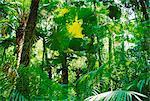Forêt pluviale, le Parc National de Cape Tribulation, Queensland, Australie