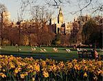 Narzissen im St. James's Park mit Big Ben, London, England, Großbritannien, Europa