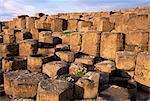Le Giants Causeway, UNESCO World Heritage Site, Co. Antrim, Ulster, Irlande du Nord, Royaume-Uni, Europe