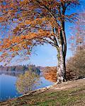 Lake, Virginia Water, Windsor Great Park, Berkshire, England, Vereinigtes Königreich, Europa