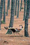 Man sleeping beneath trees, Aquitaine, France, Europe