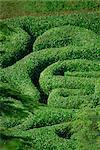 Glendurgan Maze, Cornwall, England, United Kingdom, Europe