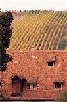 Toit et automne vignes, Riquewihr, Alsace, France, Europe