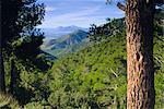 Sierra de Espuna, Province de Murcia, Espagne, Europe