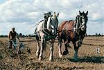 Labour avec chevaux shire, Derbyshire, Angleterre, Royaume-Uni, Europe