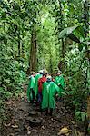 Marcher dans la forêt, Parc National de Tortuguero, Costa Rica, l'Amérique centrale