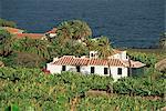 Banana plantation, Tenerife, Canary Islands, Spain, Atlantic, Europe